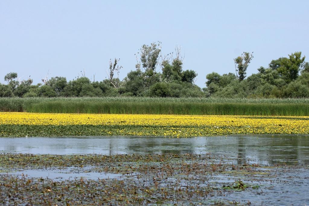 Tisza-tó tündérfátylas