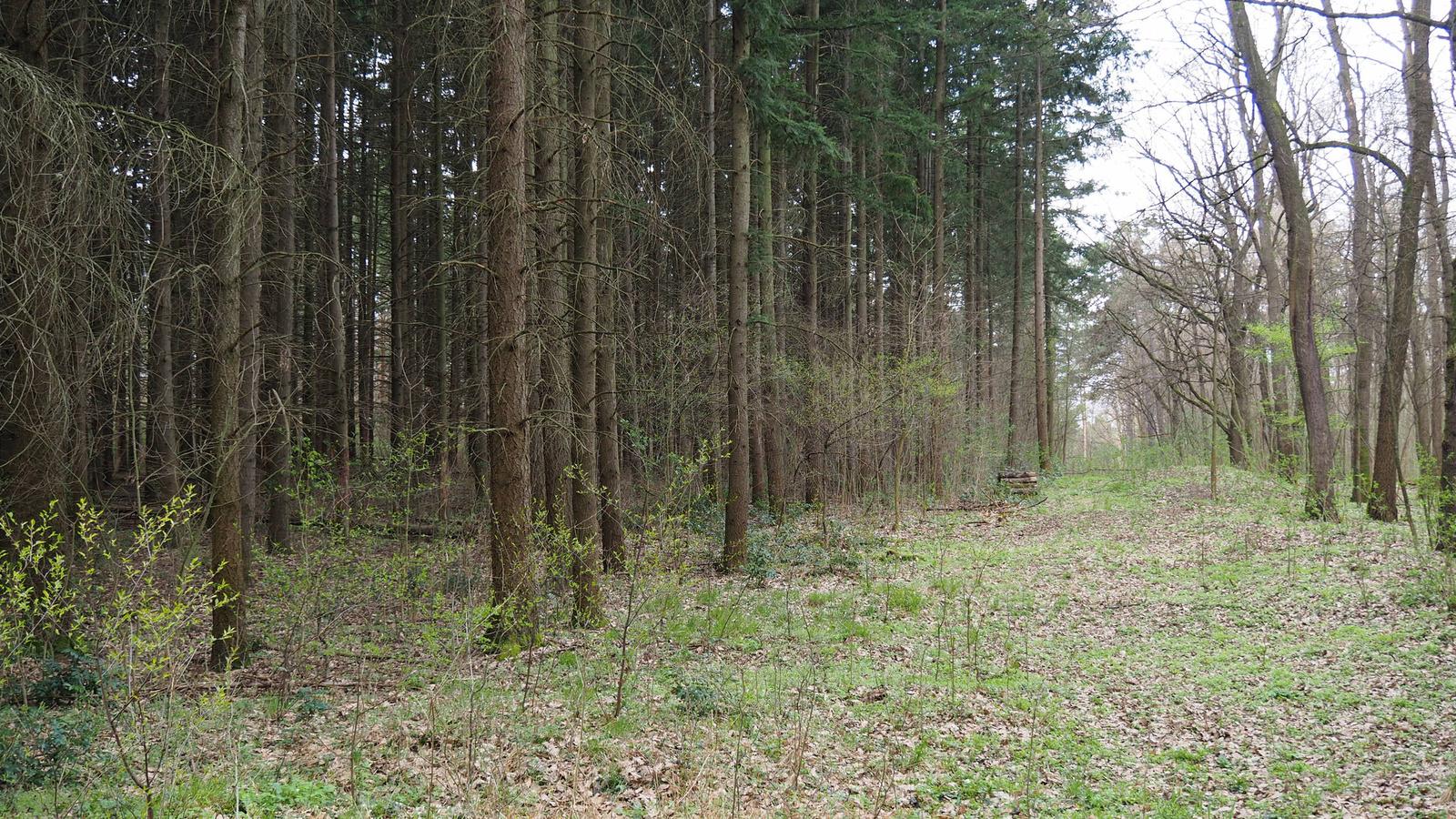 Gödöllő, az Arborétum, SzG3