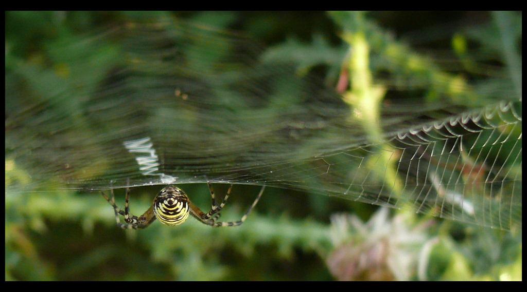 pókhátsó