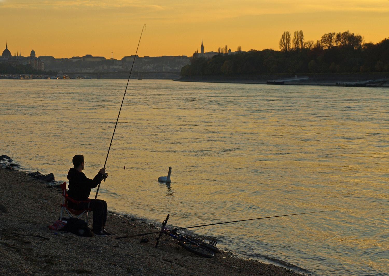 Duna - horgászfiú és egy hattyú az Árpád hídnál