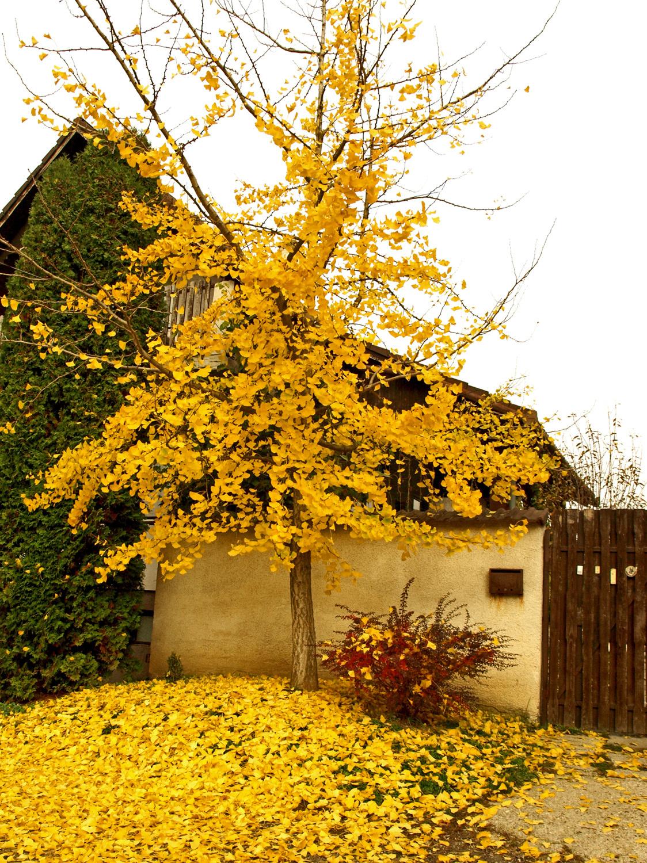 bekopogott az ősz