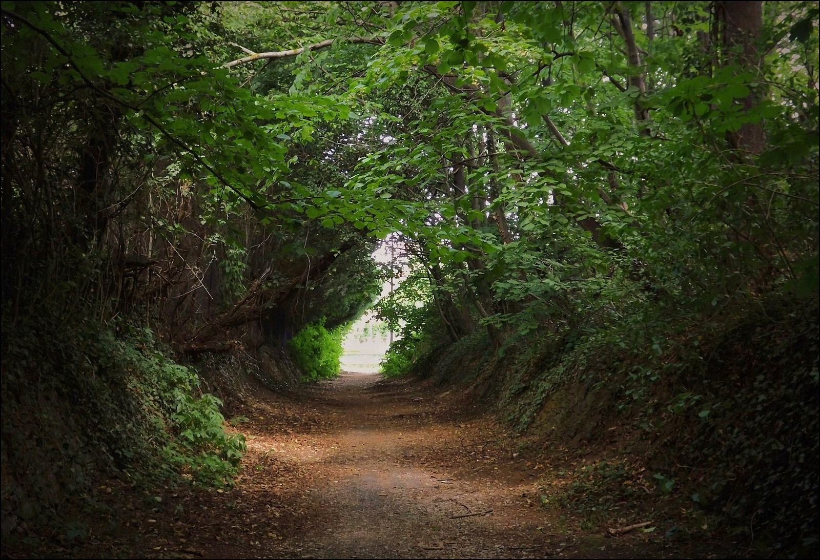 Zöld alagút