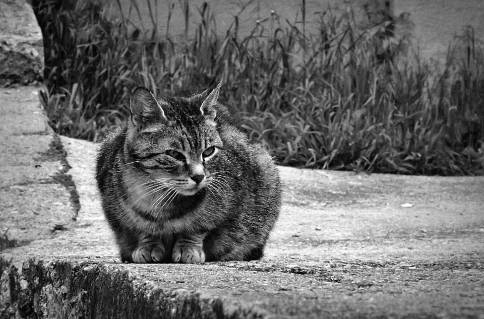 A templom macskája