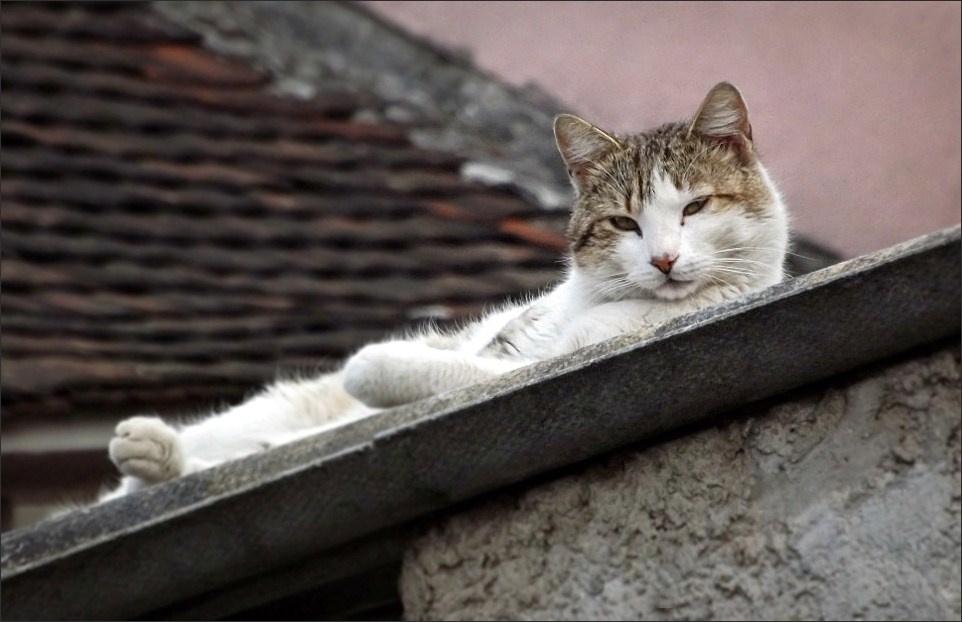 Macskaágy 2.
