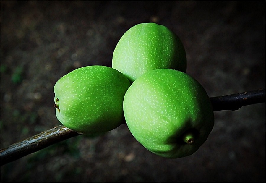 Zöld trió