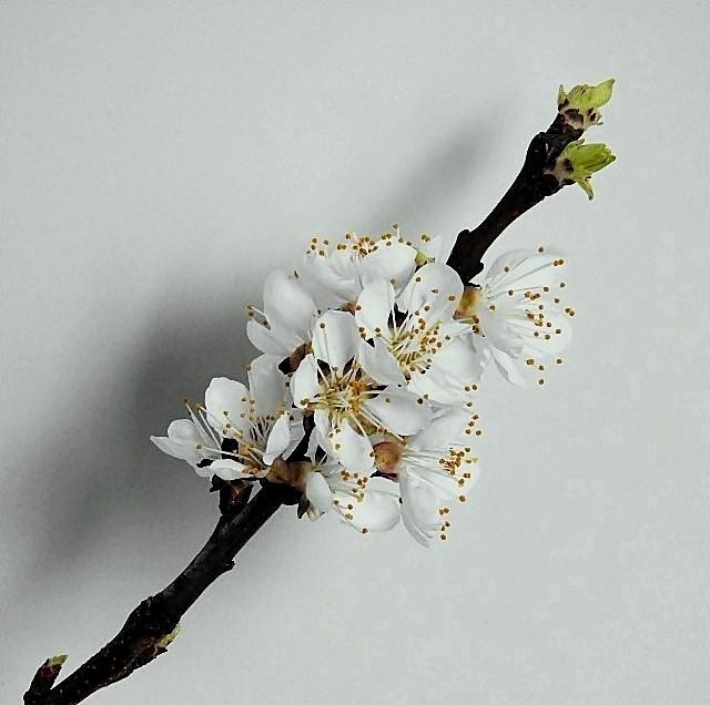 Tavaszi virágom 5.