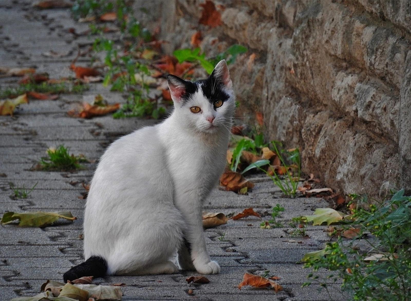 Őszi cica