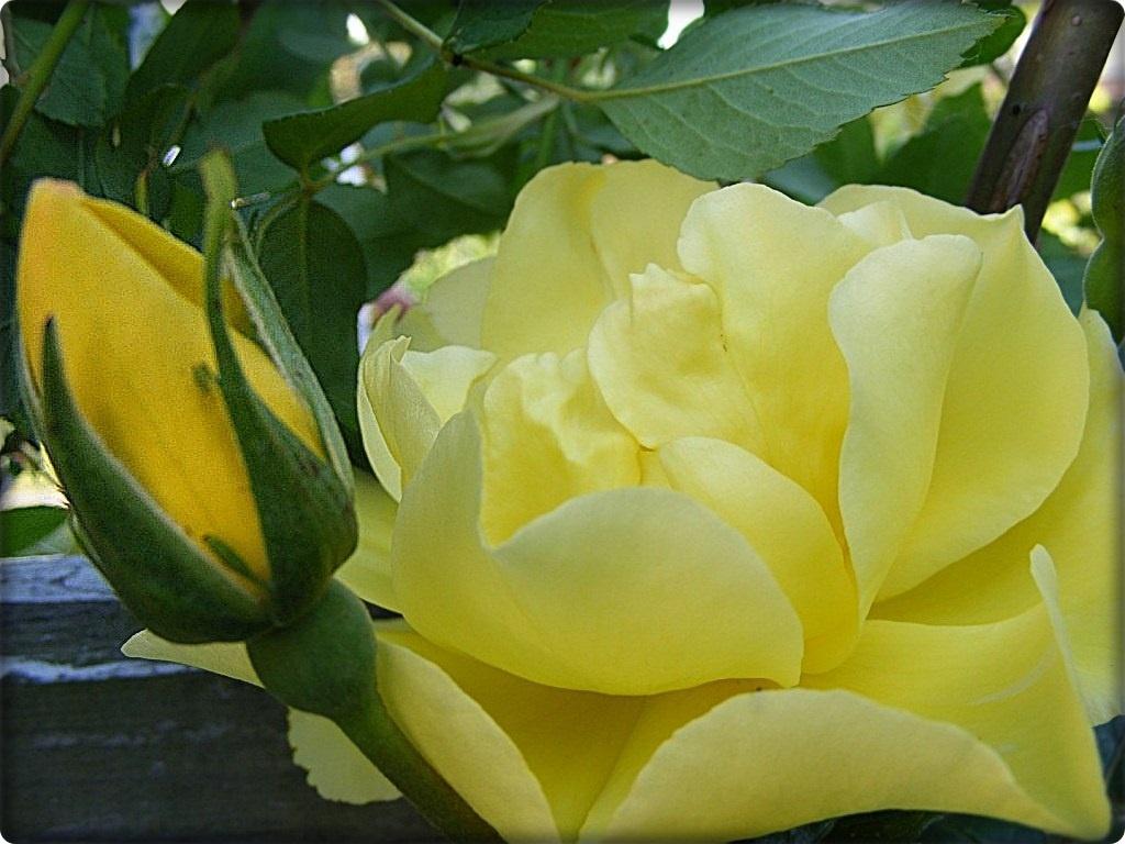 sárga mint ....:))