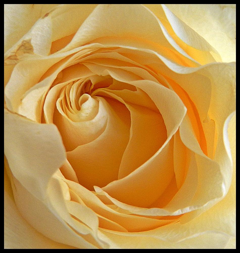 Rózsáim78