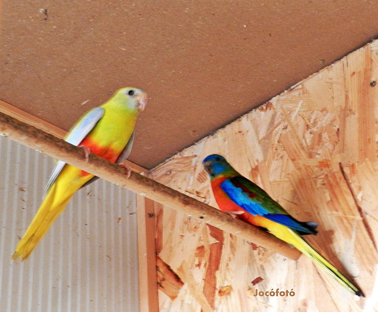 Ékes papagájaim 2080