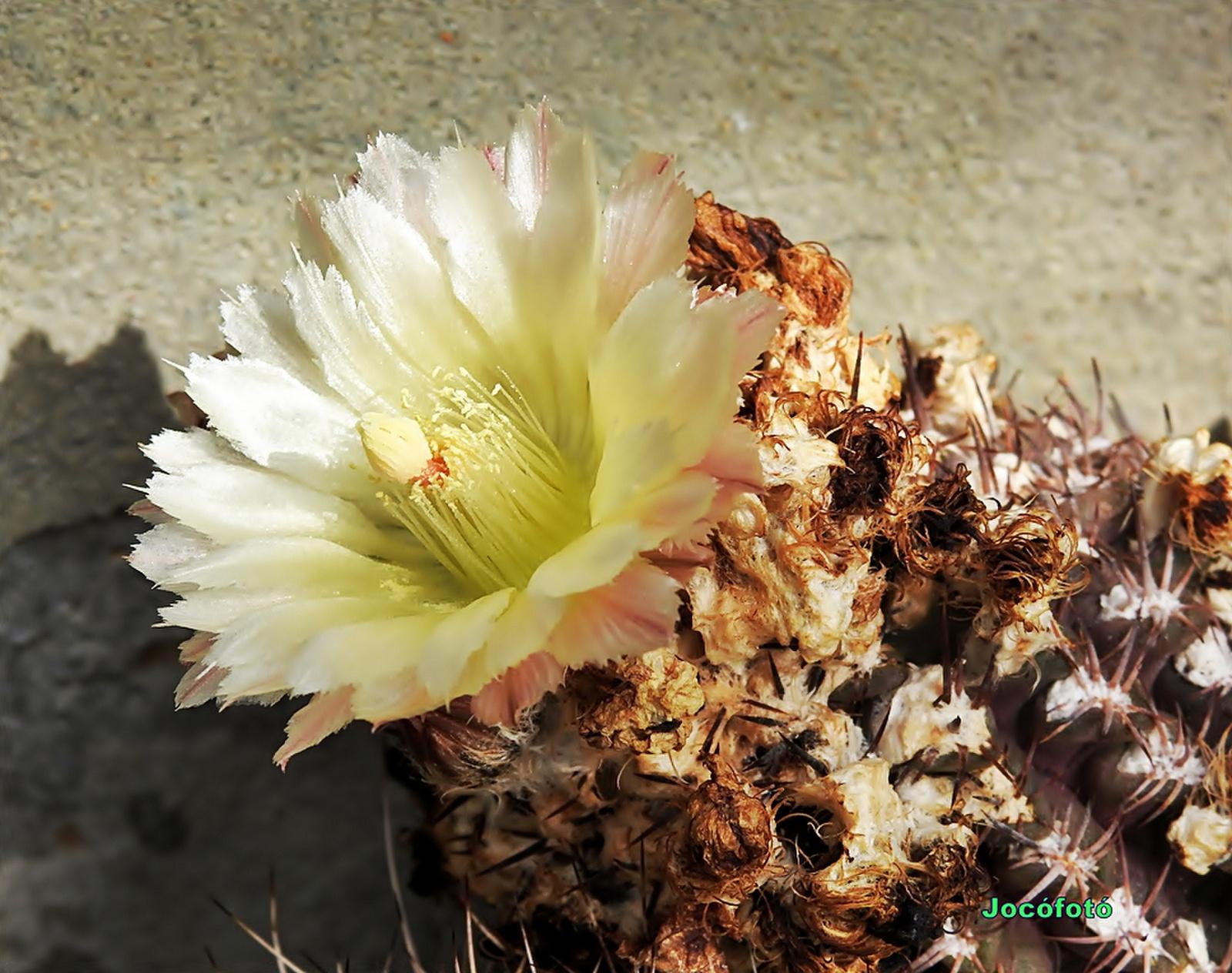 Kaktusz 1410