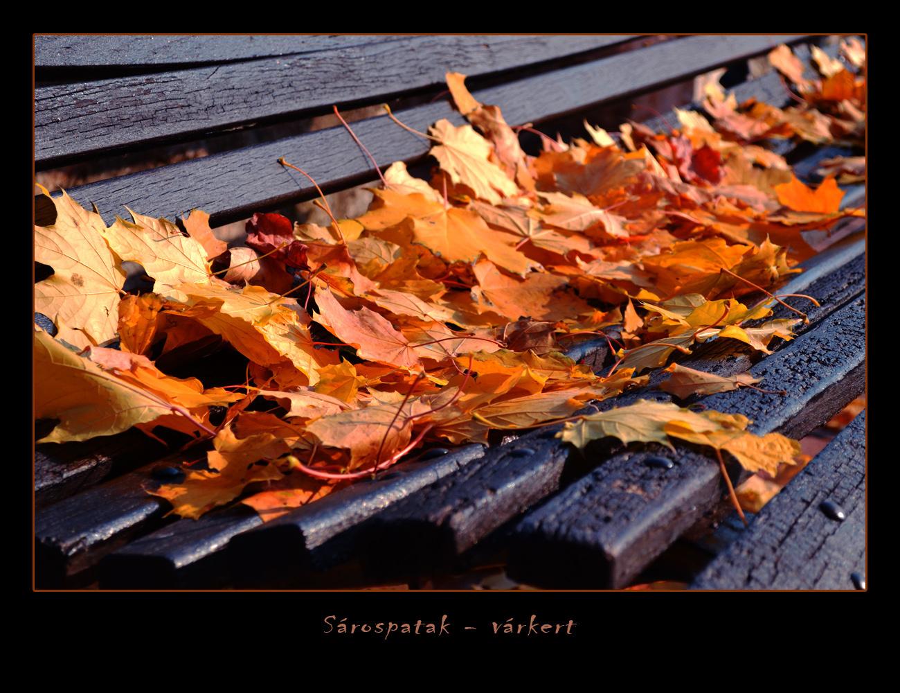 ősz-színek 3