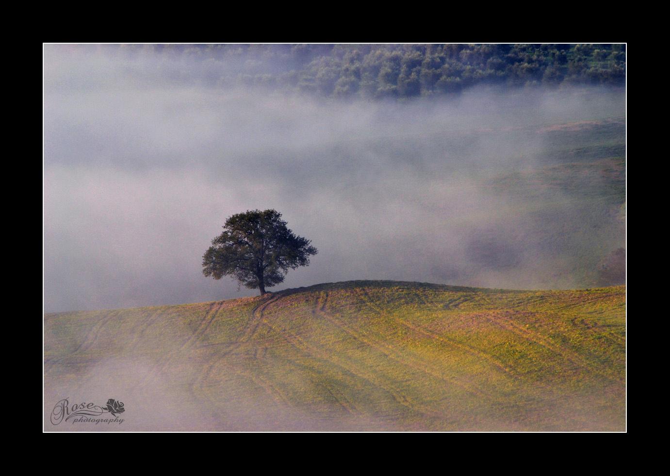 köd utánam