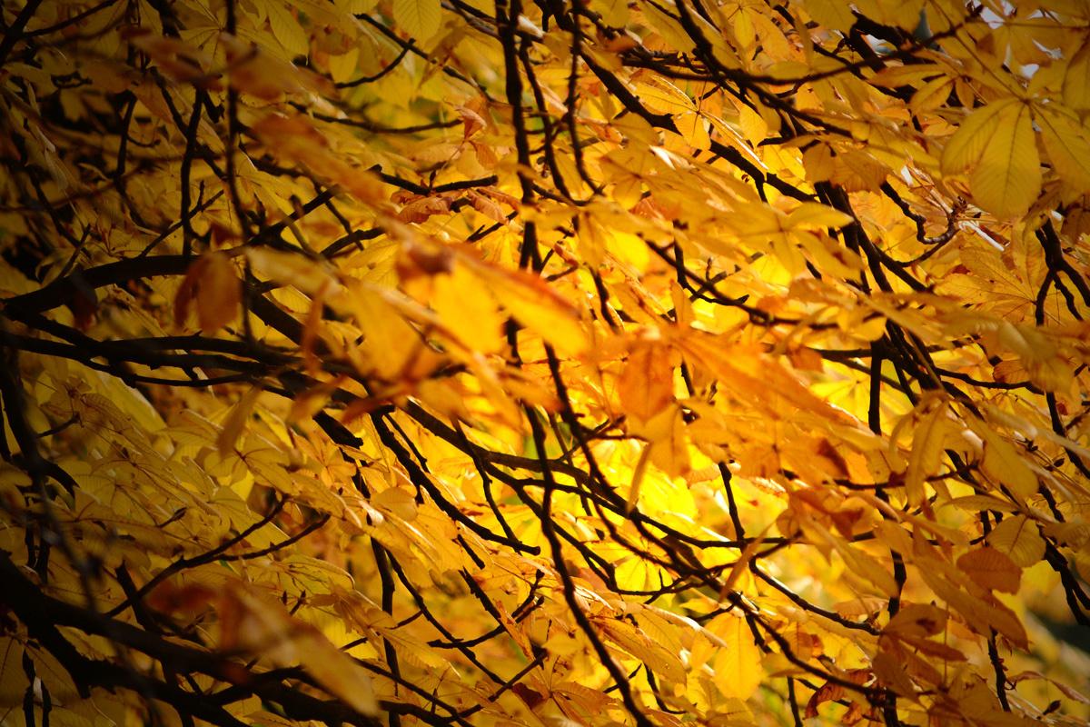 ősz sárga