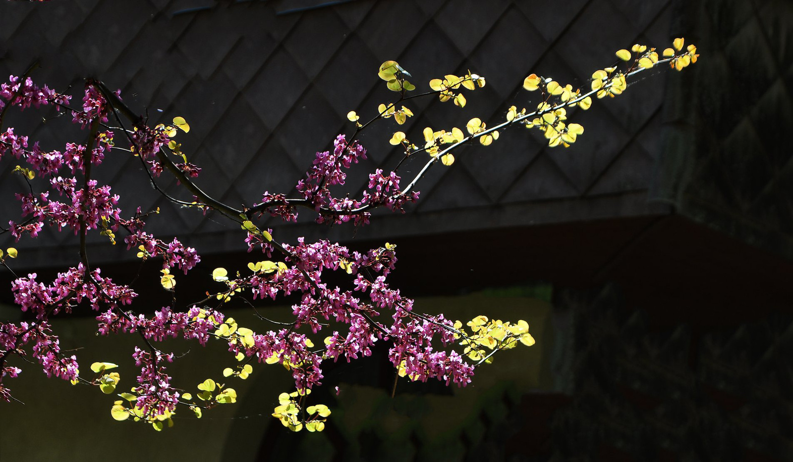 Tavaszi ágak