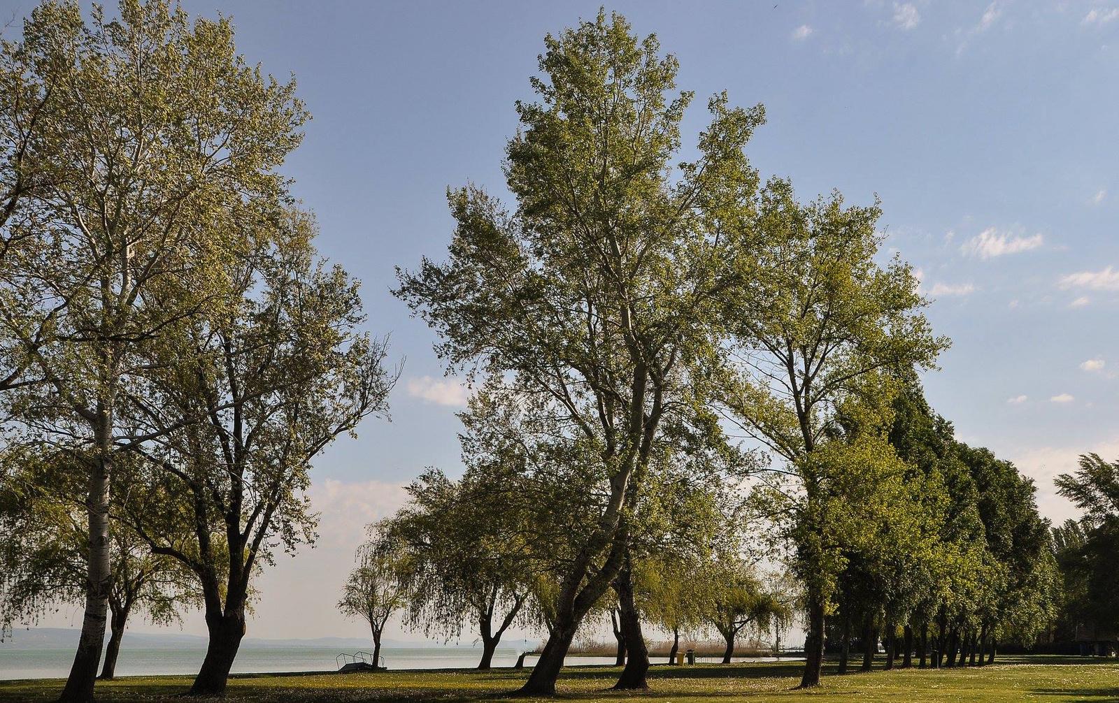 Ölelkező fák