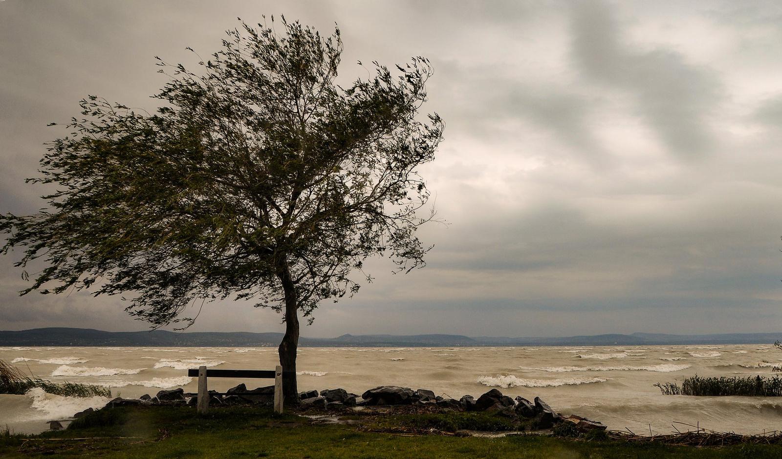 Májusi szélben a parton