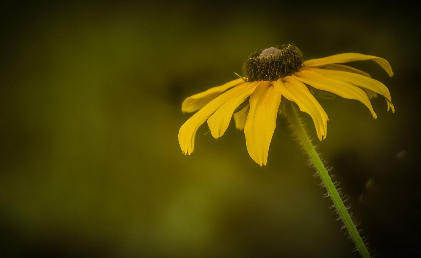 Egy szál sárga virág