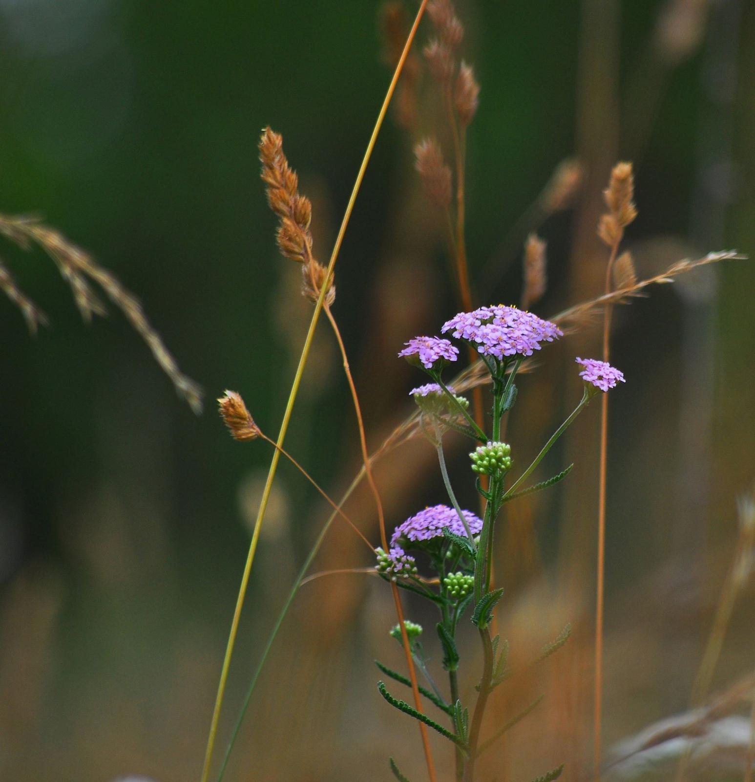 Néhány szál a fűben