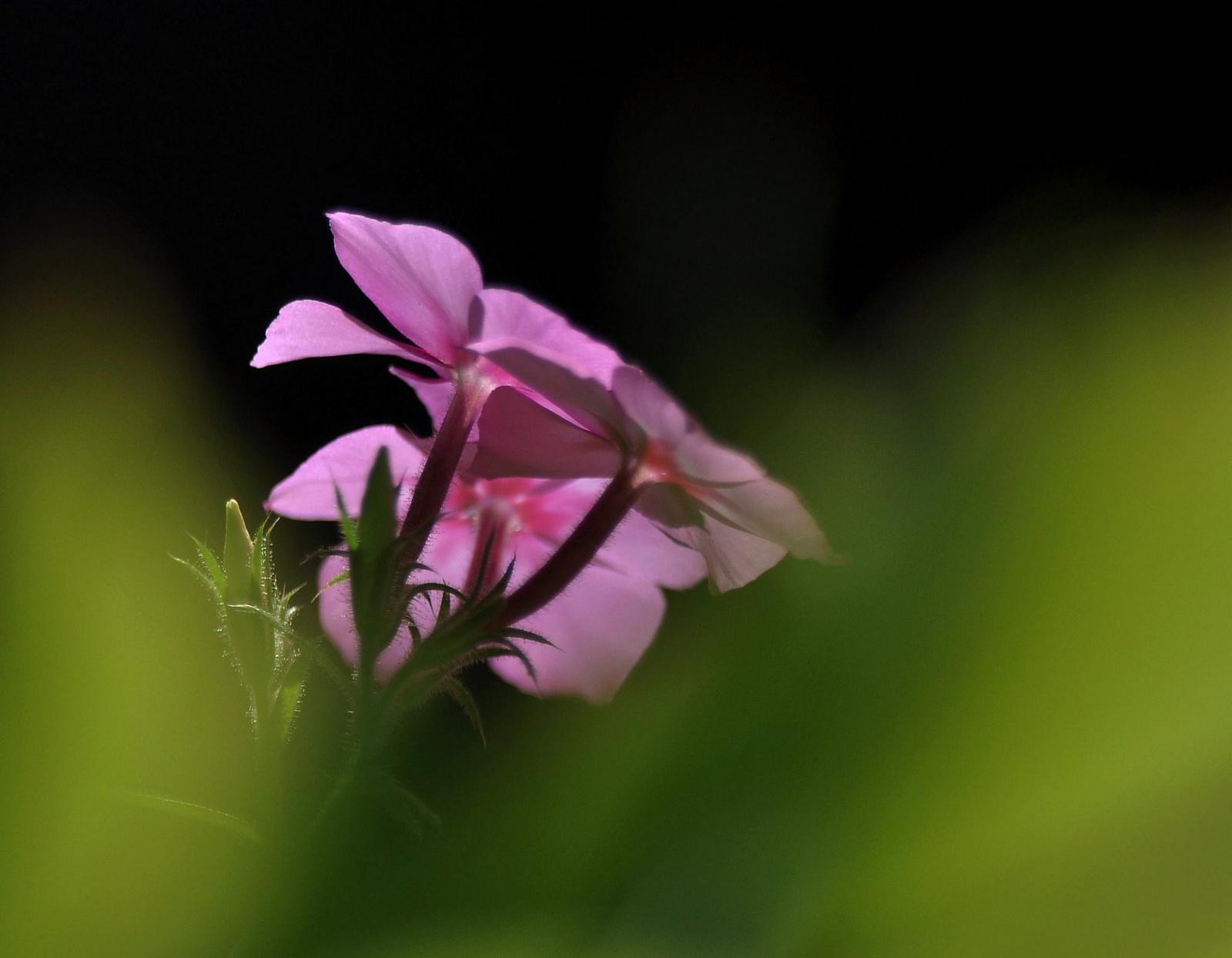 Kicsi virág