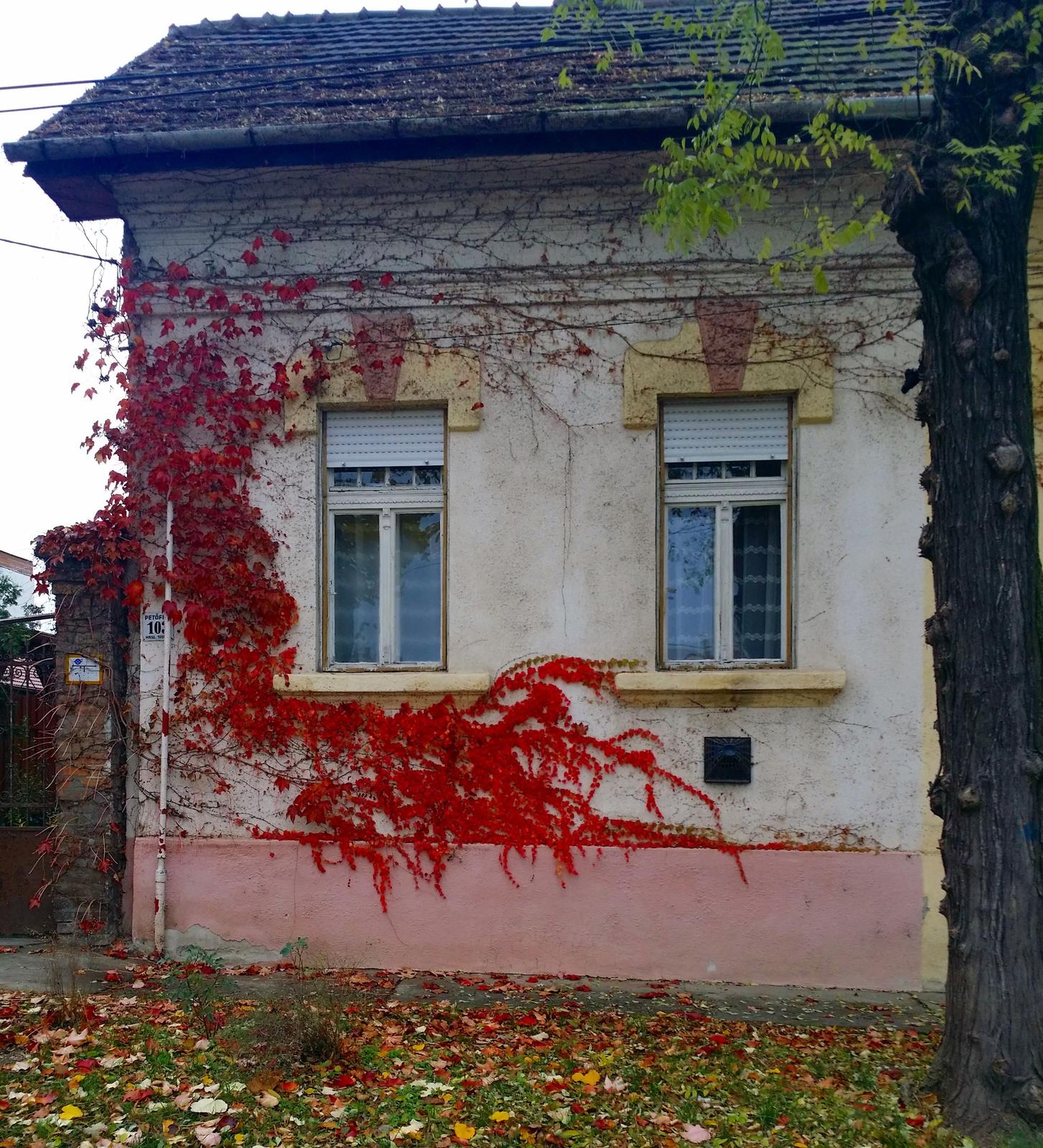Szép őszi színek