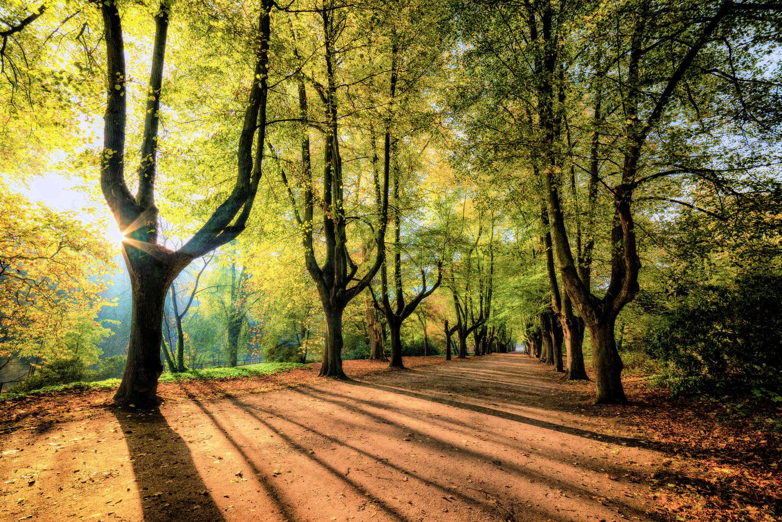 trees-sunrise-3796183