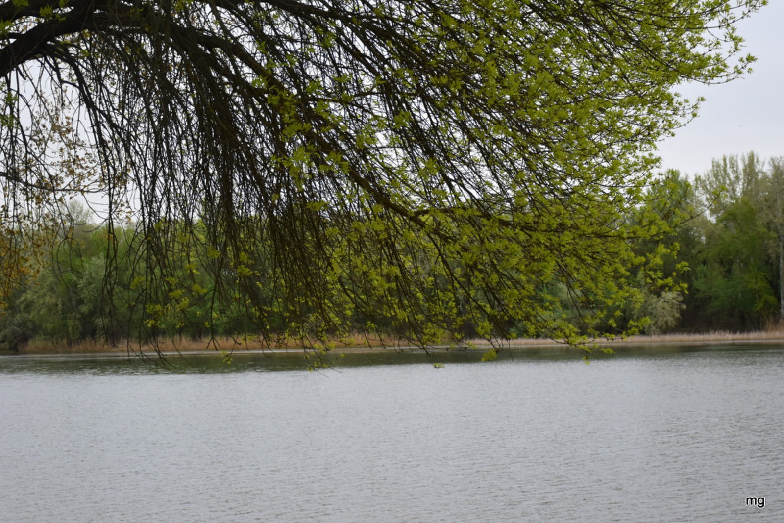 Zöldülő ágak