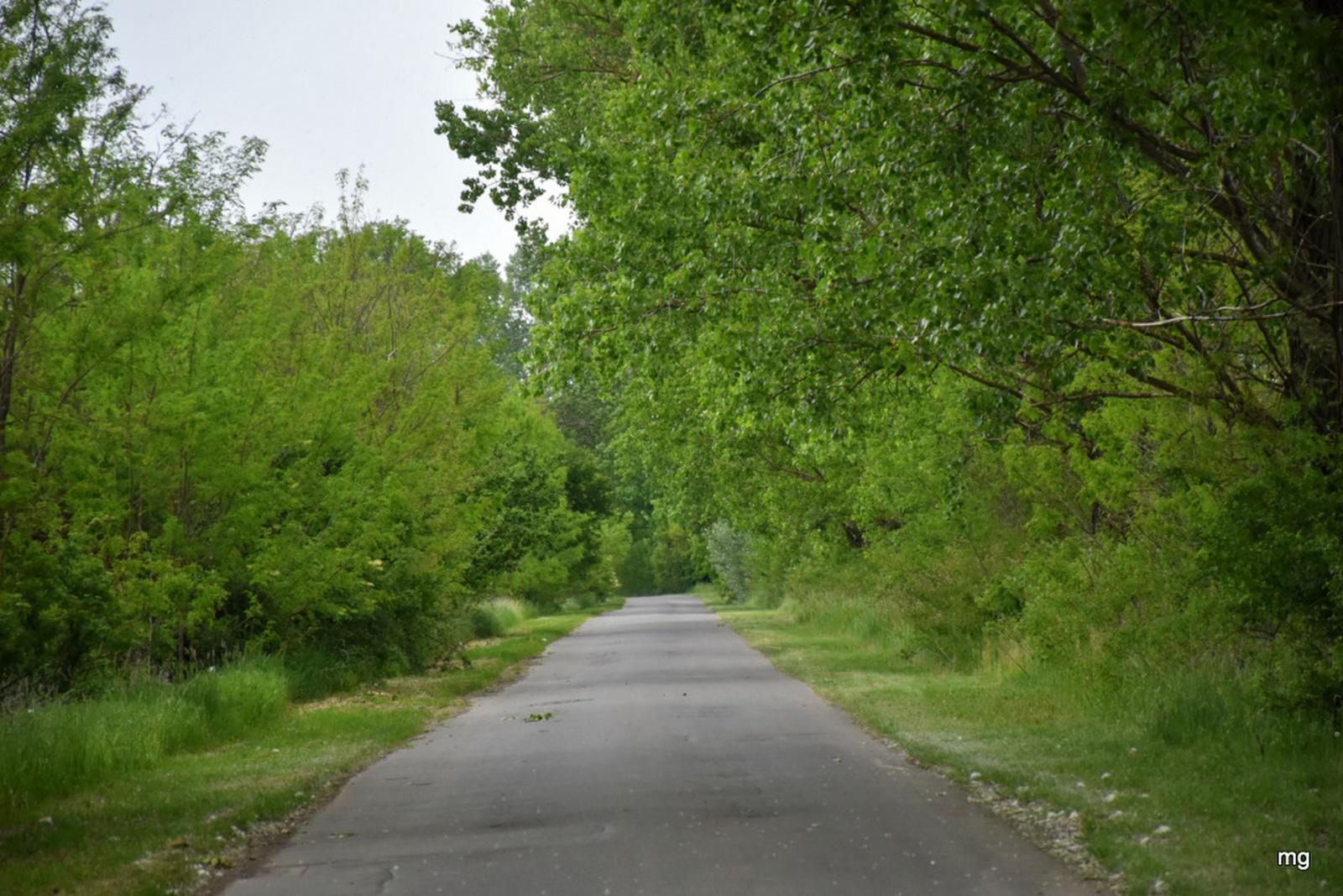 Behajló fák között