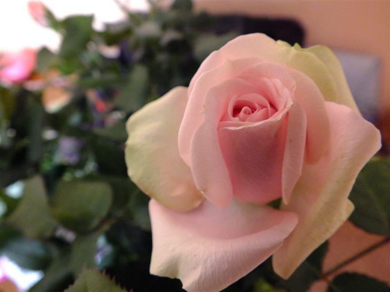 rózsás a helyzet