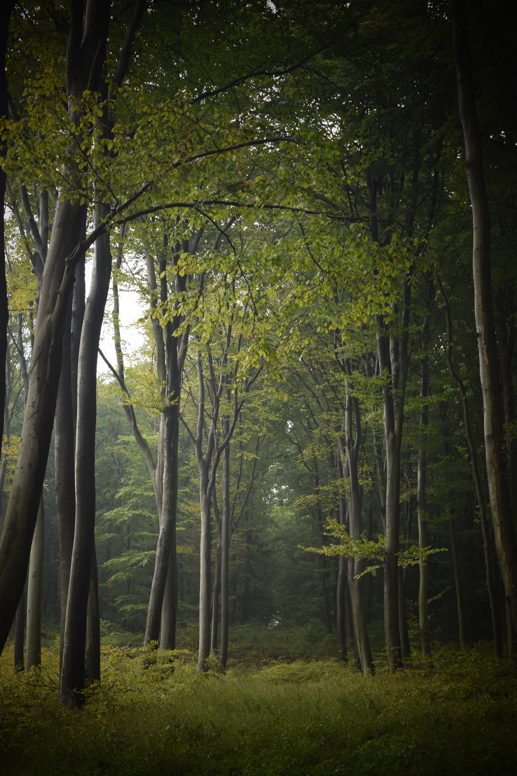 Erdő mélyén 2
