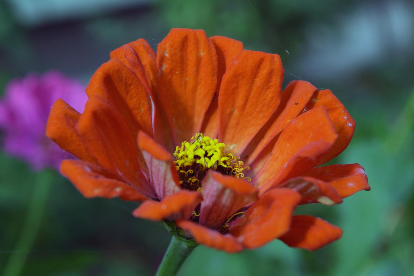Őszi kerti virágok