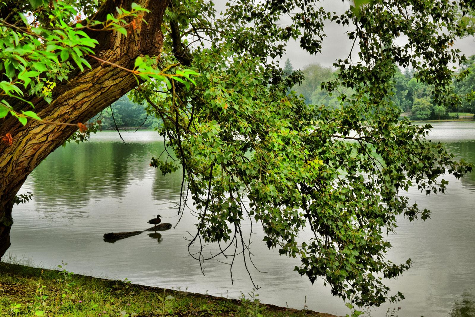 A tó őre