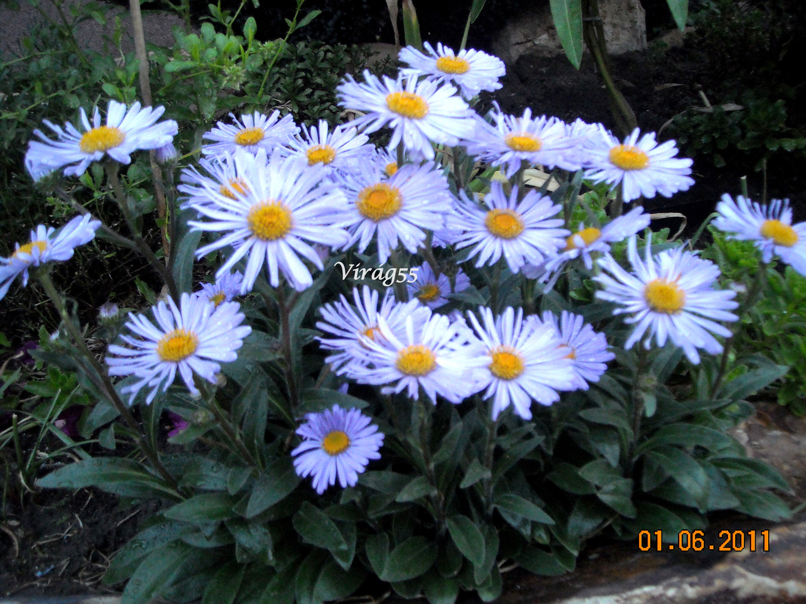 Aster 06.02 003