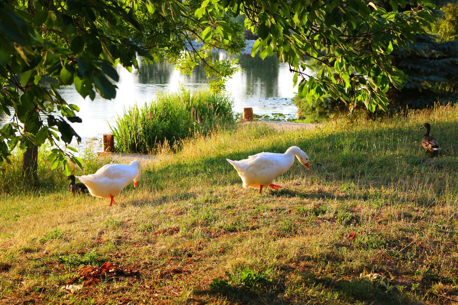 Reggel a tónál 012