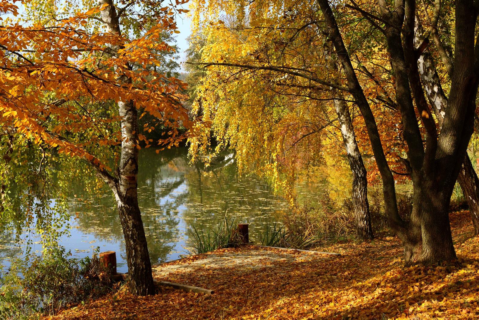 A tó 0099