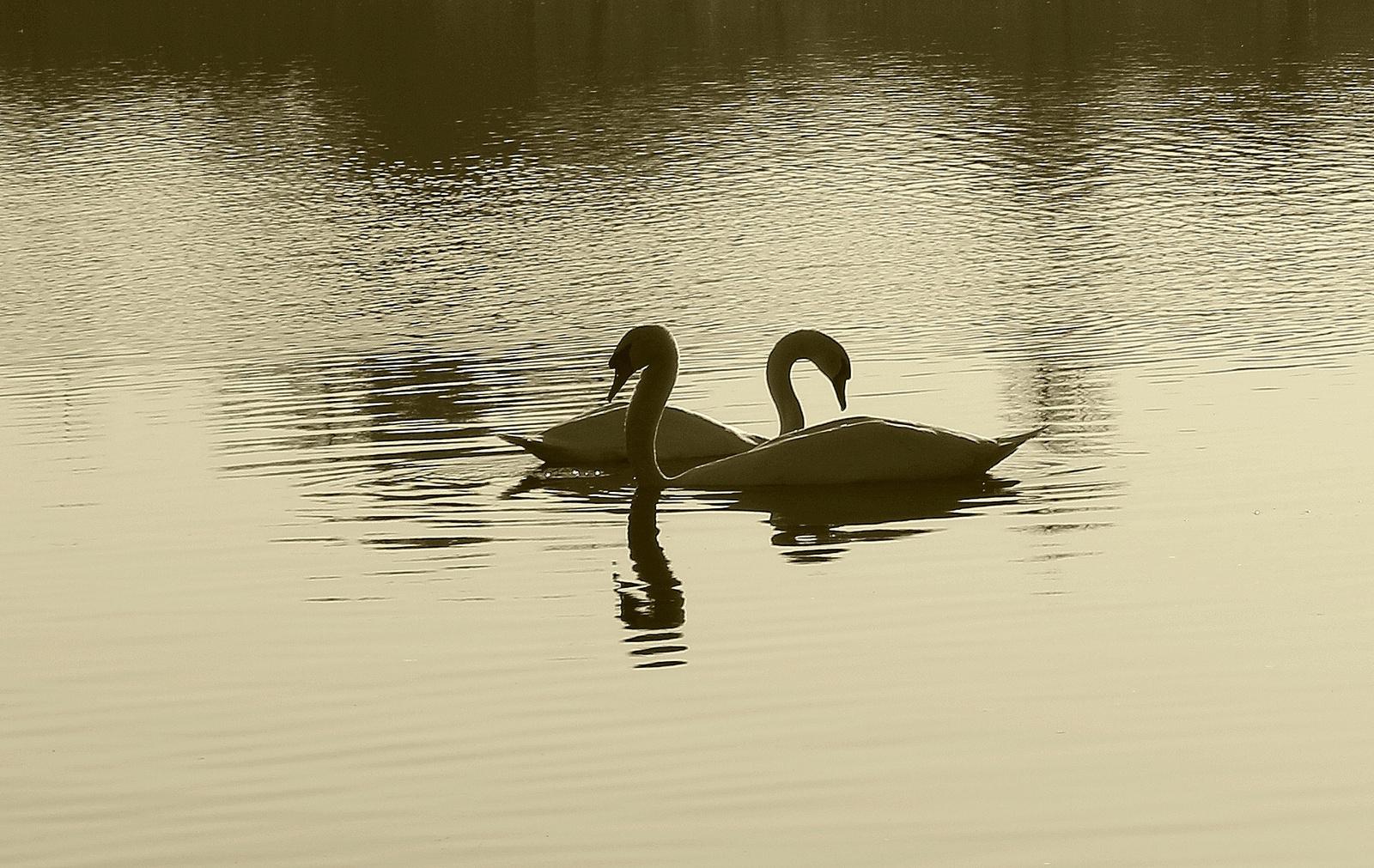 A tó 046