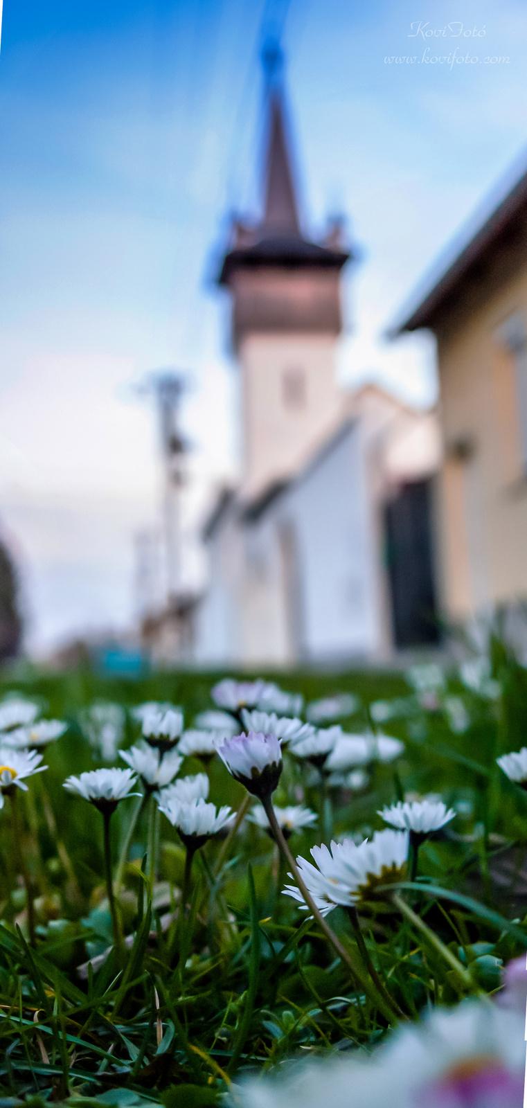 Pataji Múzeum virág szemszögből