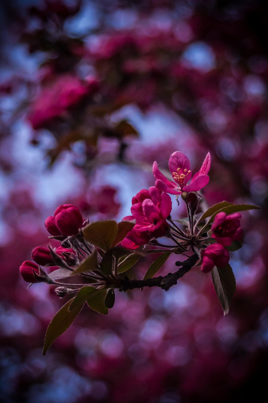Tavaszi Virágzás 2