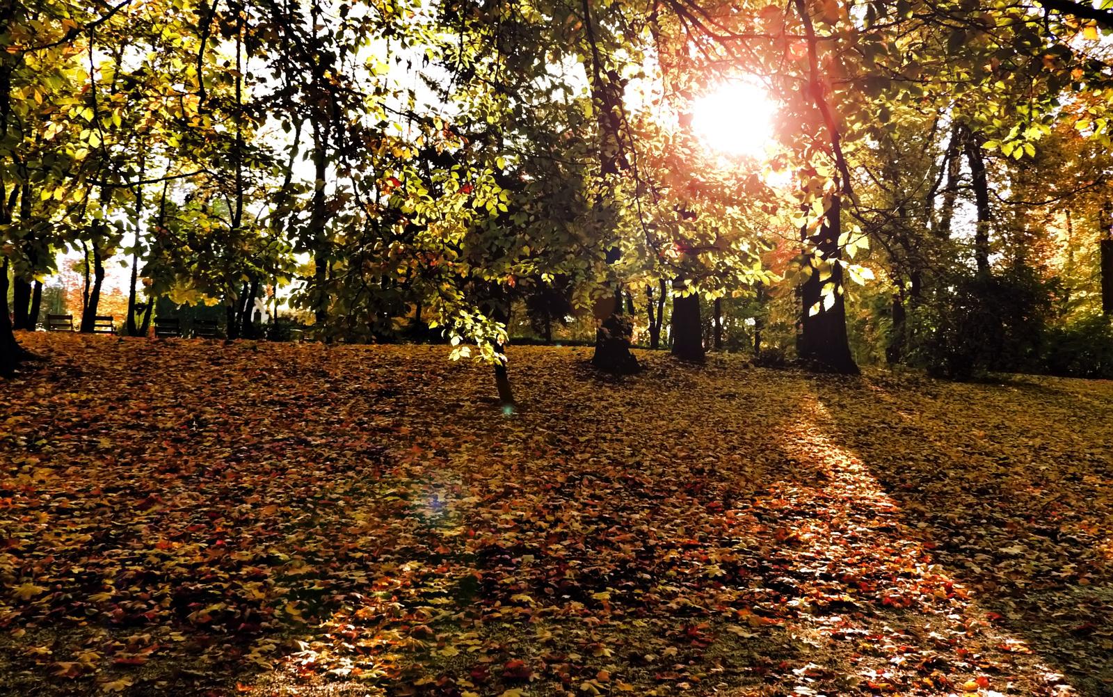 Fák levelek sárga ősz