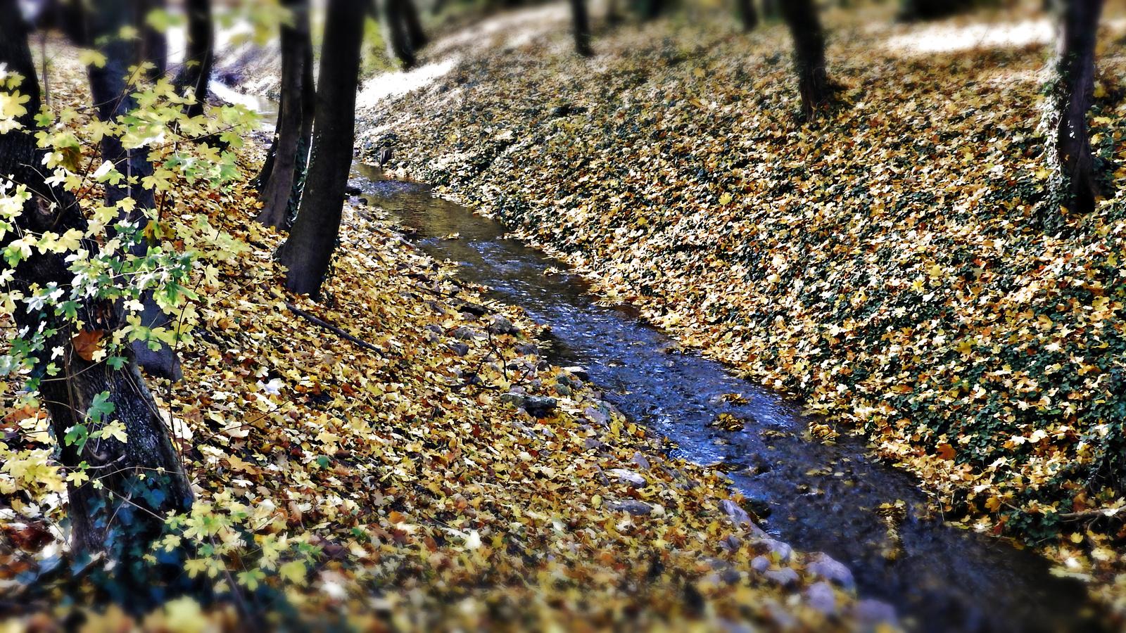 Sopron - Erzsébet kert, patak