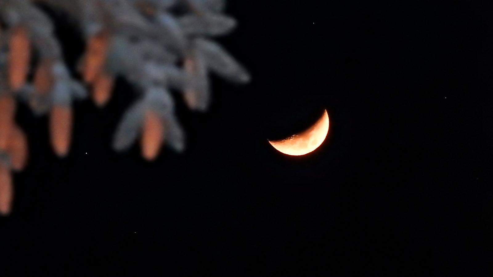 Hold a fenyőágak mögött