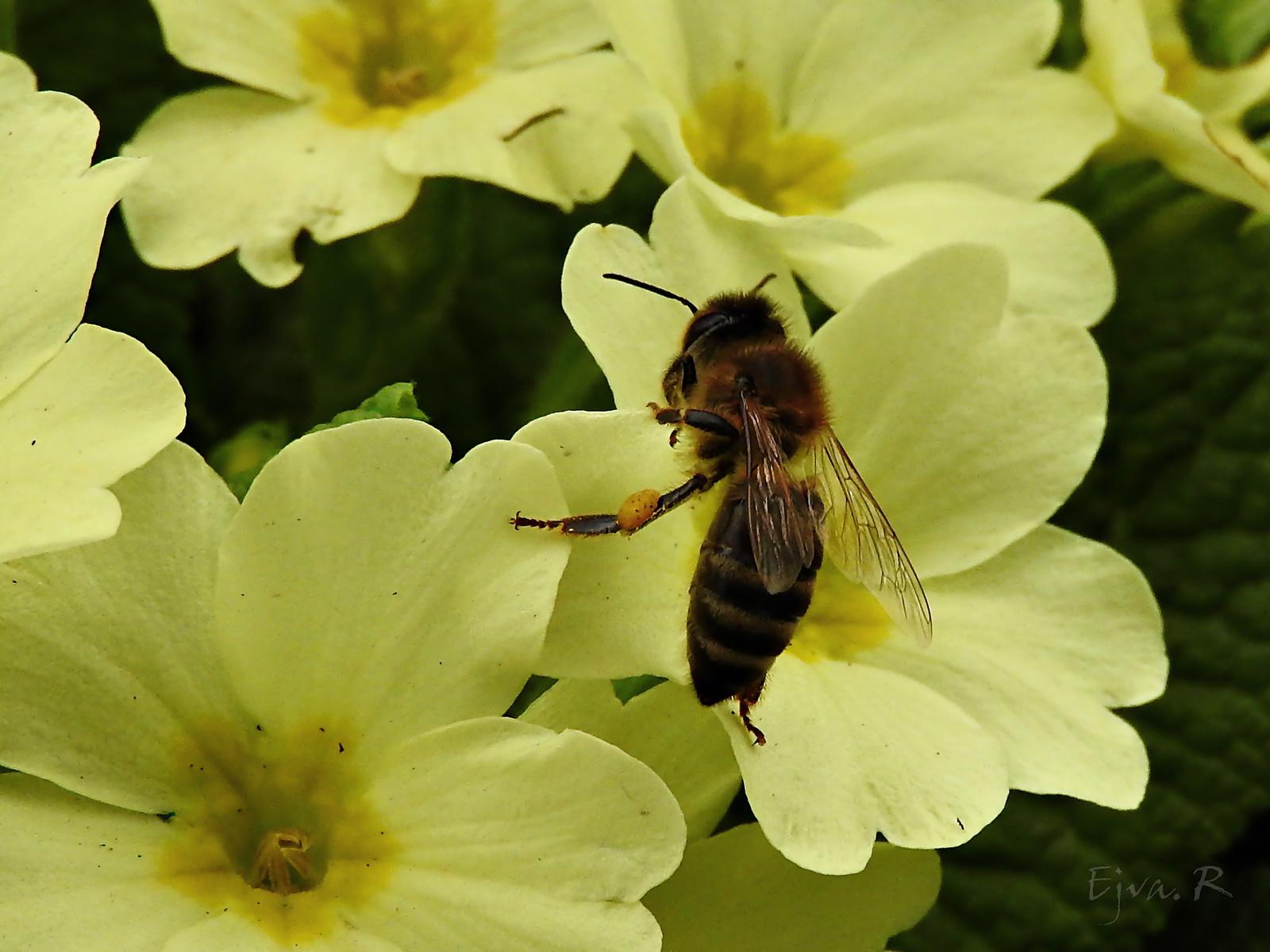 Az első méhek