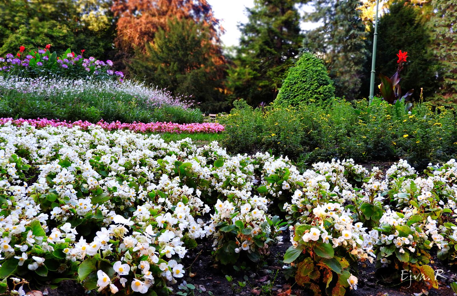 Park Nyár Virágok