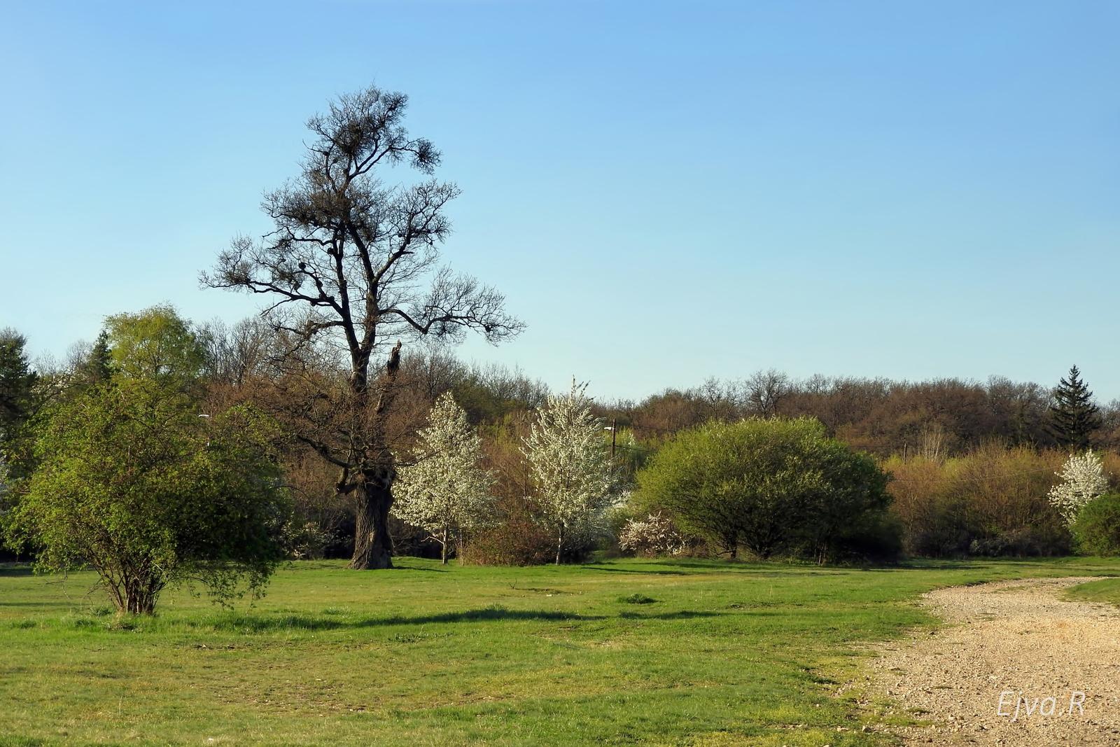 Tavasz Táj