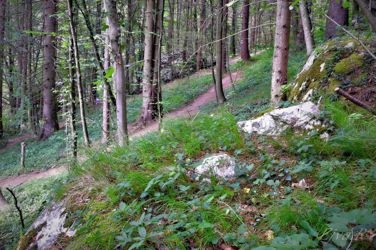 Erdő Ősvény Nyár Alpok