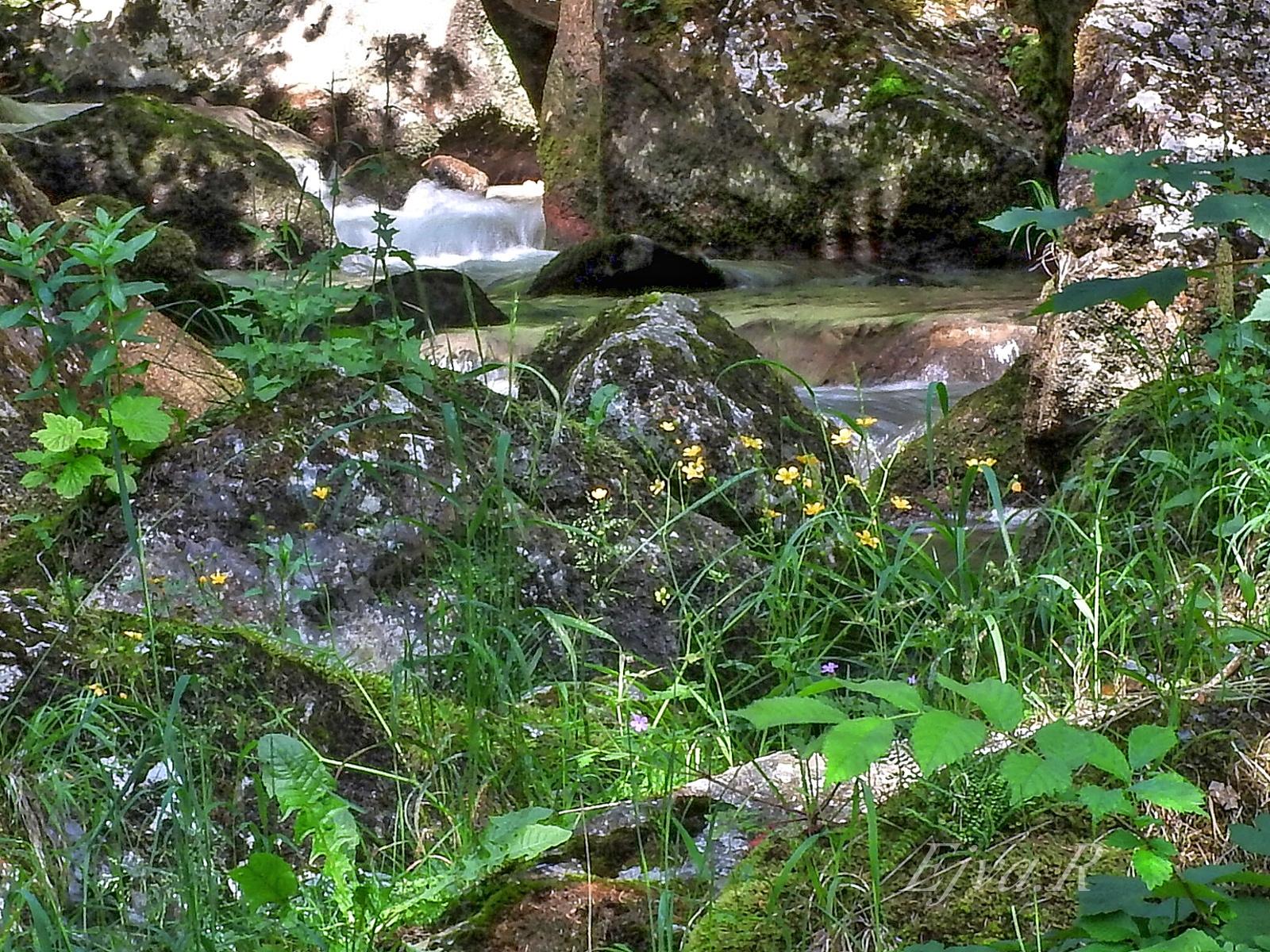 Vízesés Patak Virágok Alpok