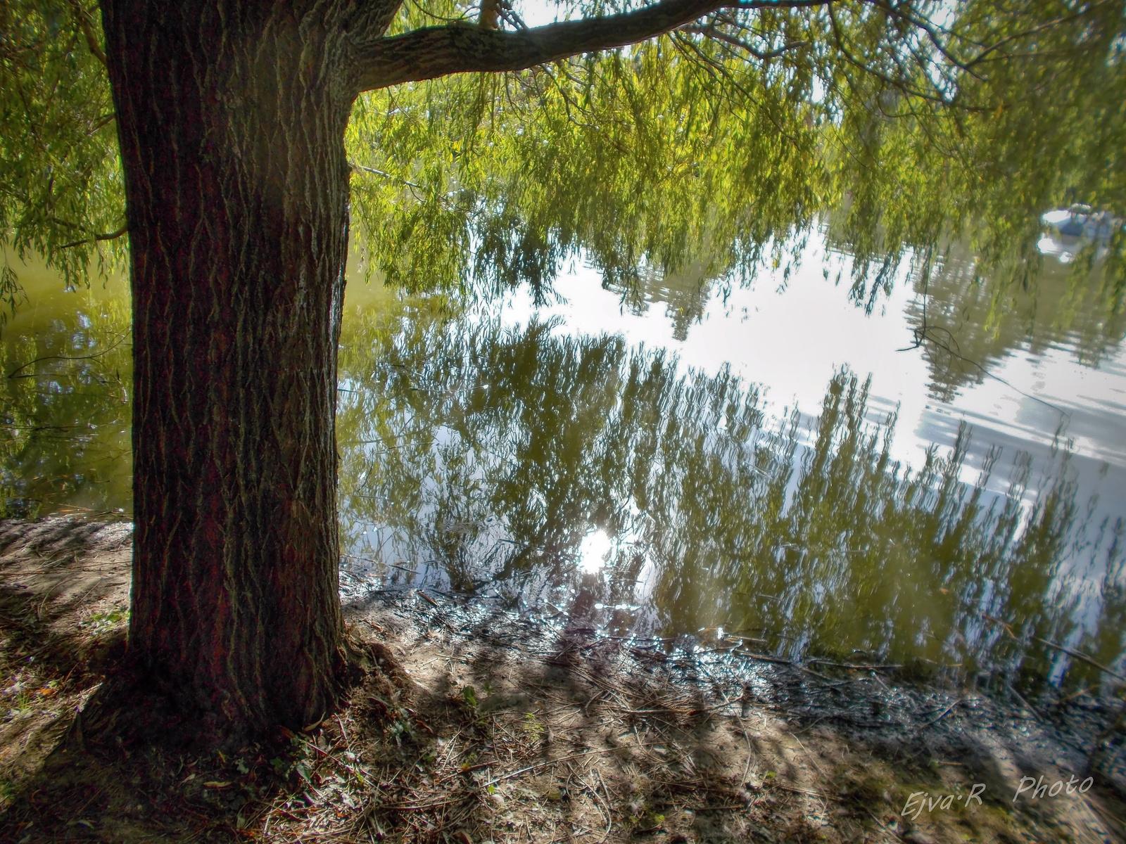 Tükröződés / Csónakázó tó - Sárvár