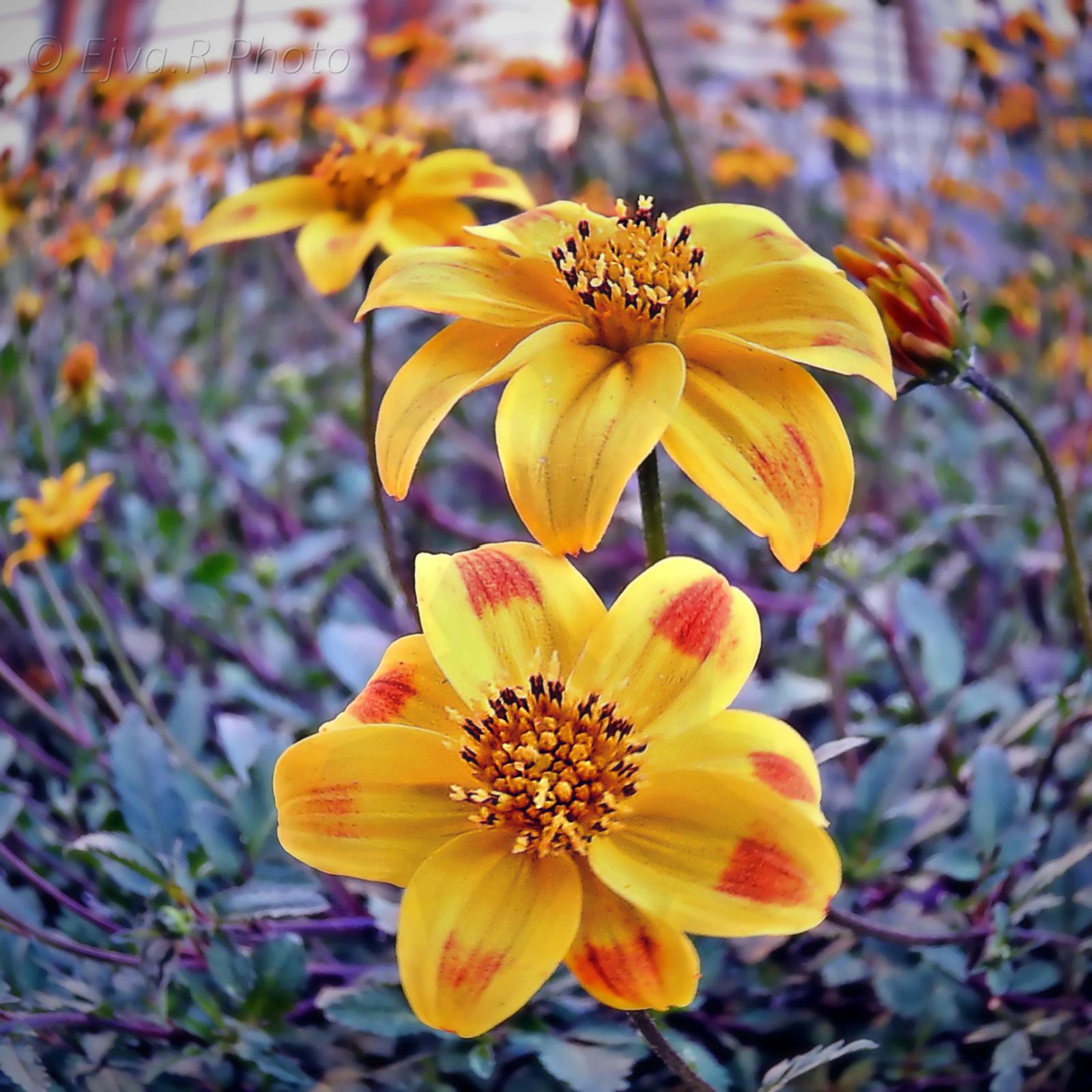 Virágok virágok virágok