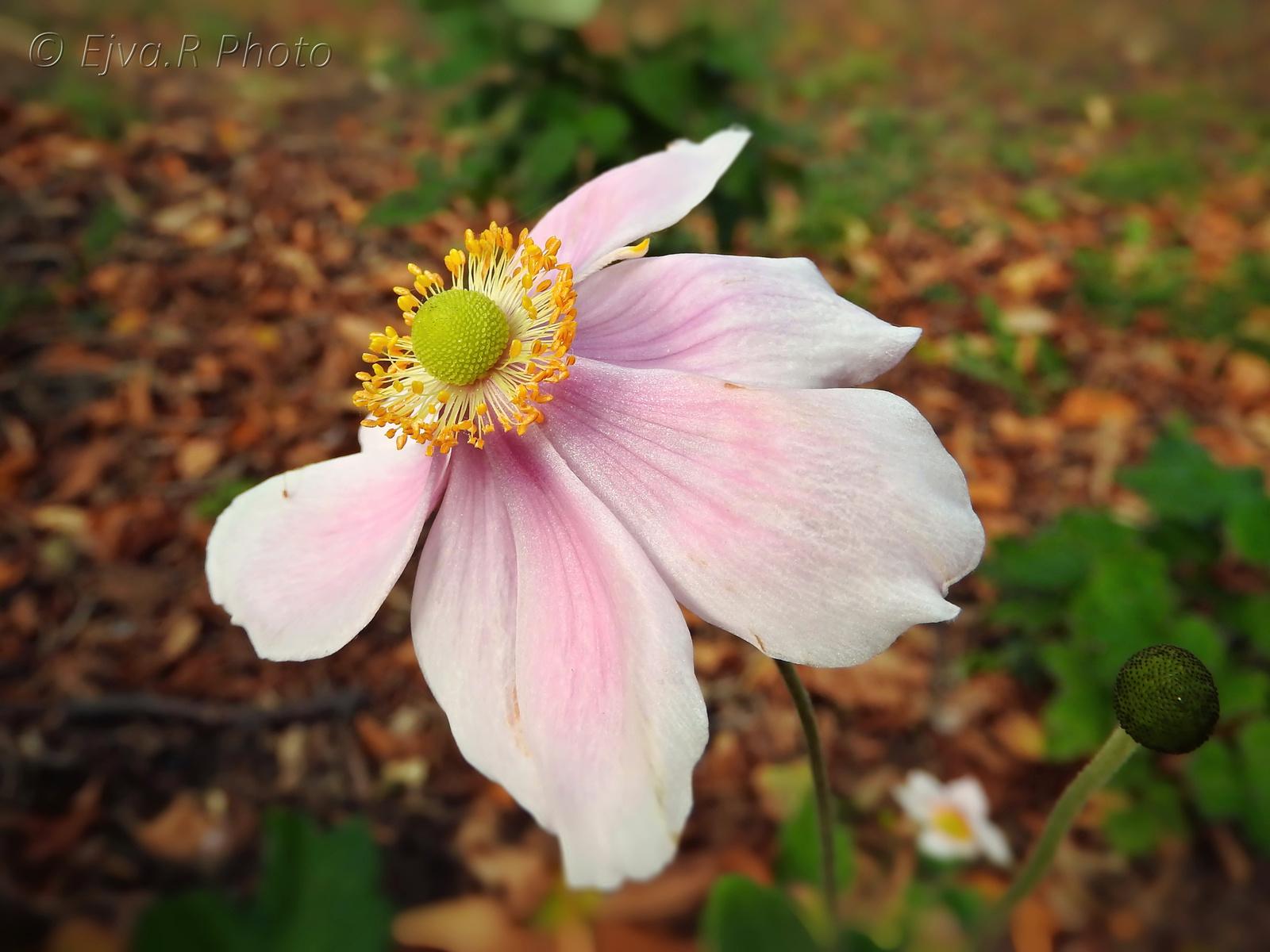 Virág Ősz