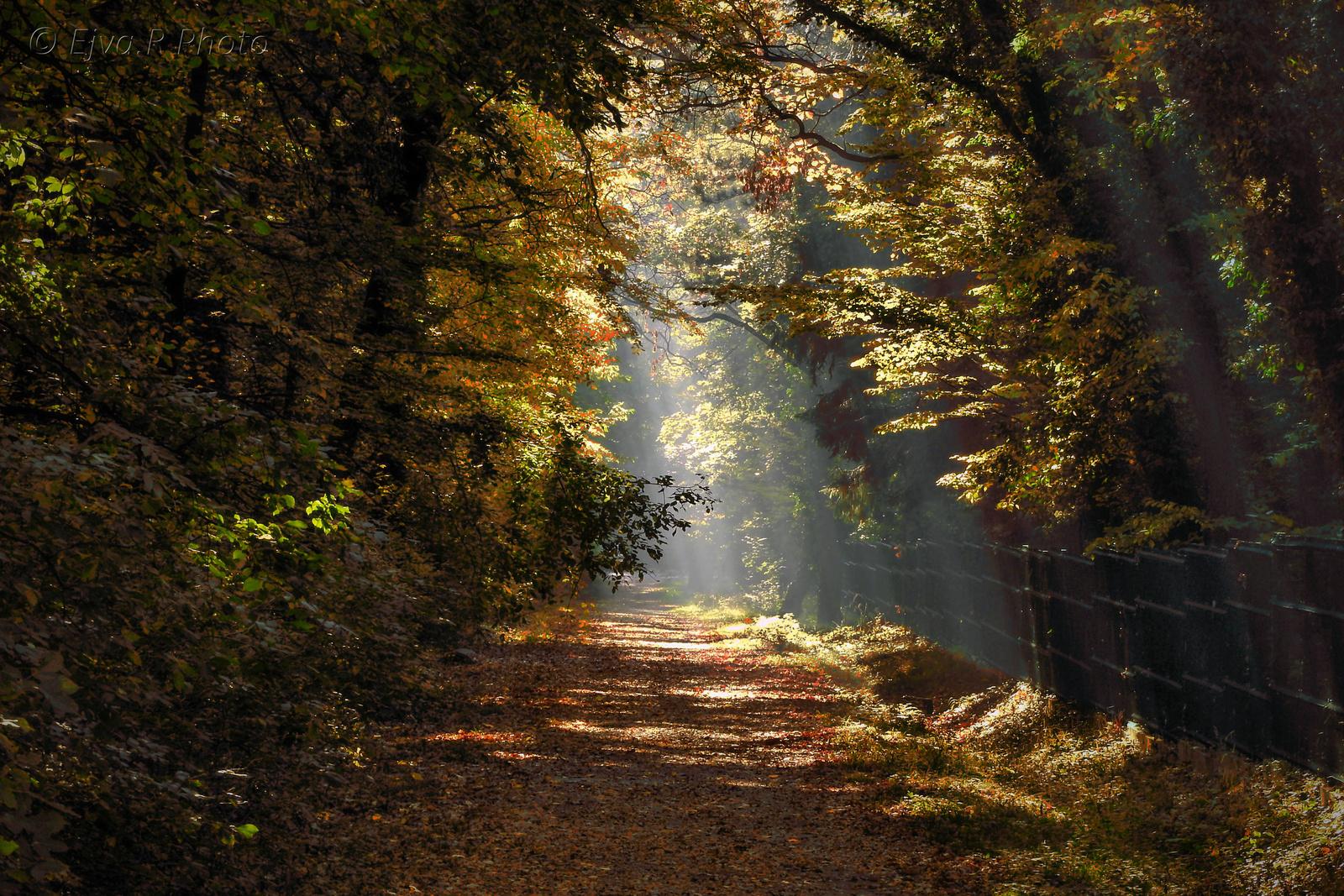 Ősz Sétány Erdő
